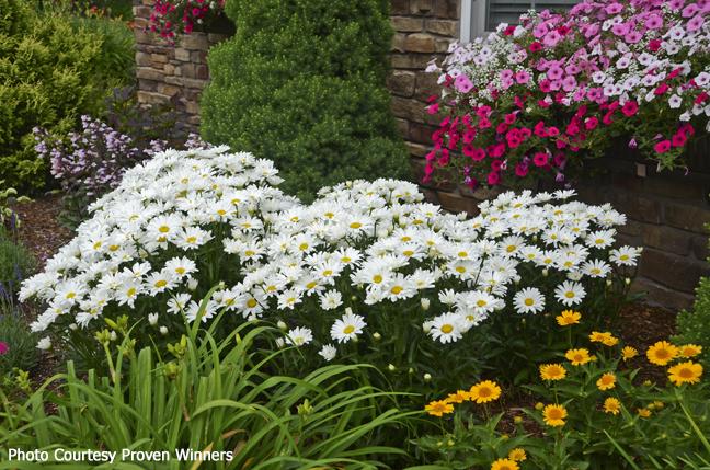 Foundation bed flowering garden