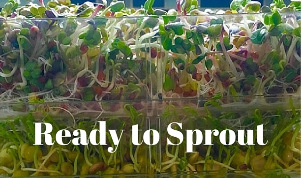 Sprouts growing in clear container with text - Ready to Sprout. Botanical Interests seed