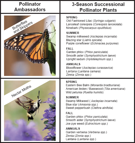 St. Louis County Parks 2018 Planting Guide for a Successful 3-Season Pollinator Pantry Garden - 2 featured Pollinator Ambassadors
