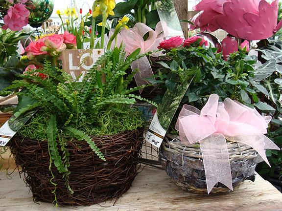 Beautiful indoor plants available at Hillermann Nursery and Florist