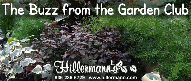 Hillermann's newsletter heading - Houseplants with the Hillermann logo. Hillermann Nursery & Florist, 636-239-6729, www.hillermann.com