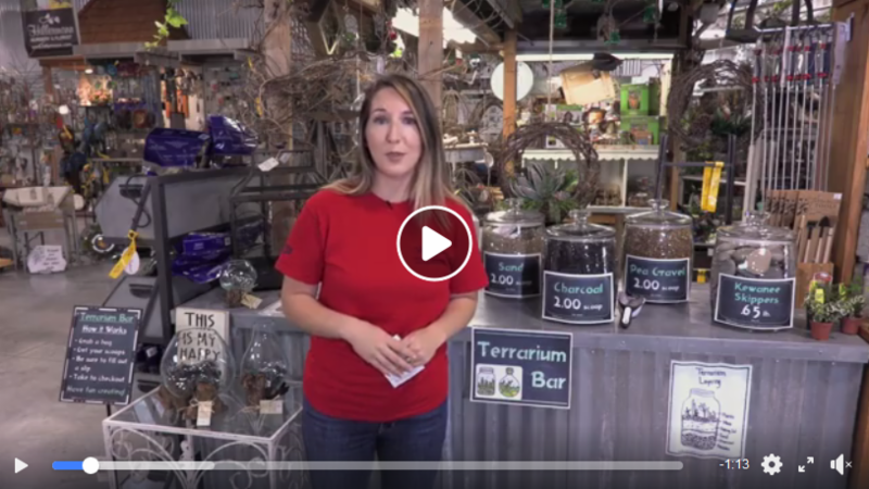 Video image for the Terrarium Bar video by Hillermann Nursery and Florist