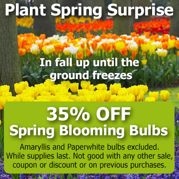 Spring blooming flower bulb picture with text - Plant Spring Surprise in fall up until the ground freezes.