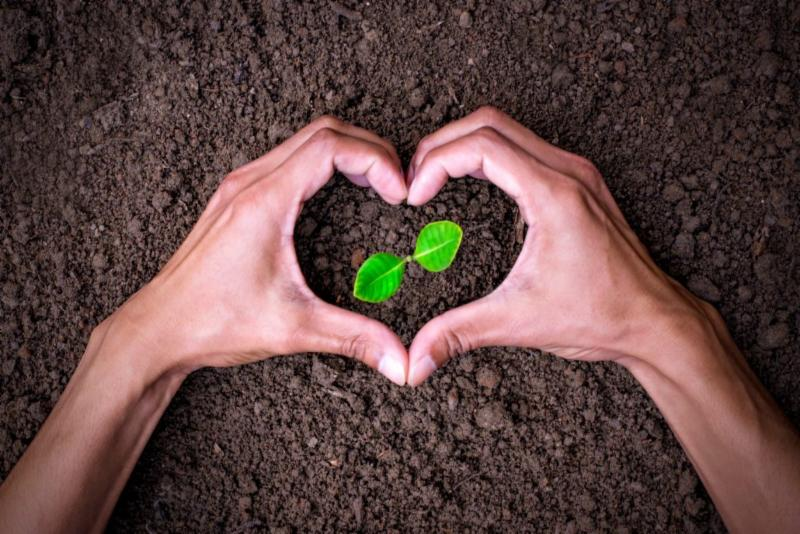 Seedling with hands in the shape of a heart around them