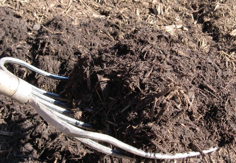 Mulch being applied with a garden fork