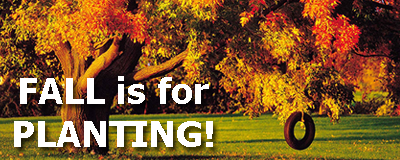 Fall is for PLANTING - picture and text graphic with a tree that has pretty fall colors