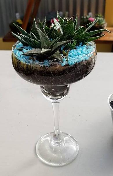 Margarita glass succulent dish garden at Hillermann Nursery and Florist