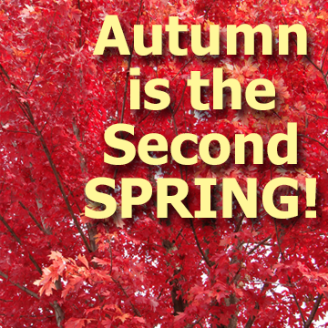 Autumn is the Second SPRING - article title block with a colorful fall tree color picture in the background