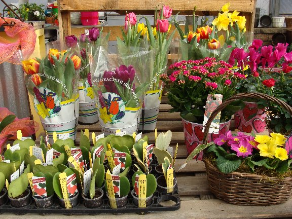 Blooming plants and mini succulent heart plants available at Hillermann Nursery and Florist