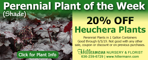 Perennial Plant of the Week - Heuchera - click for plant information