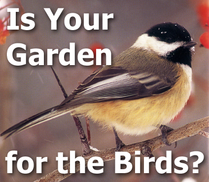 Picture of a Chickadee with title text - Is Your Garden for the Birds