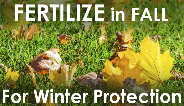 Lawn grass with fall leaves and wording - Fertilize in FALL for Winter Protection