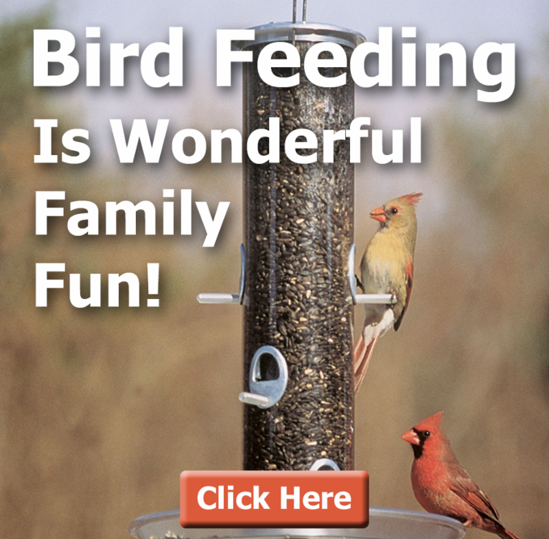 Birds at feeder picture with text - Bird Feeding is Wonderful Family Fun!