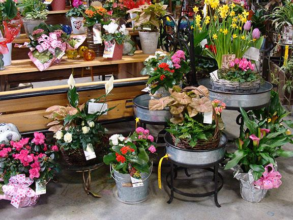 Houseplants and items available at Hillermann Nursery and Florist - February 2019