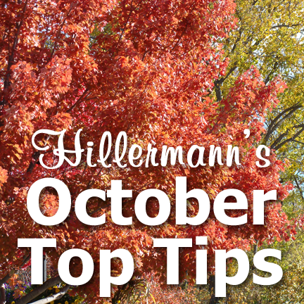 Hillermann's October Top Tips title text over a tree with pretty fall color