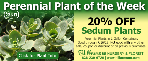 Perennial Plant of the Week - Sedum - Click image for plant information
