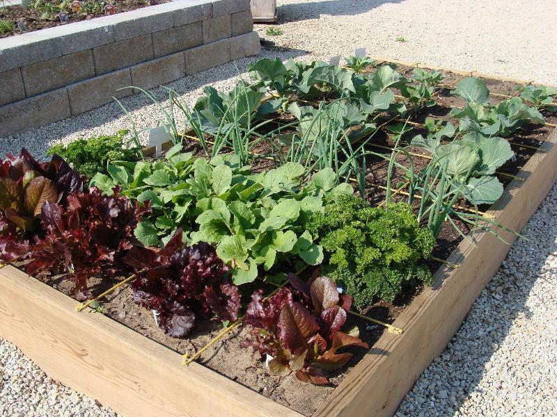 A square foot garden growing at Hillermann Nursery & Florist