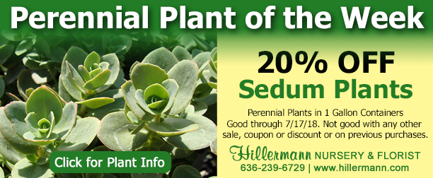 Perennial Plant of the Week - Sedum Plants - Click for plant information