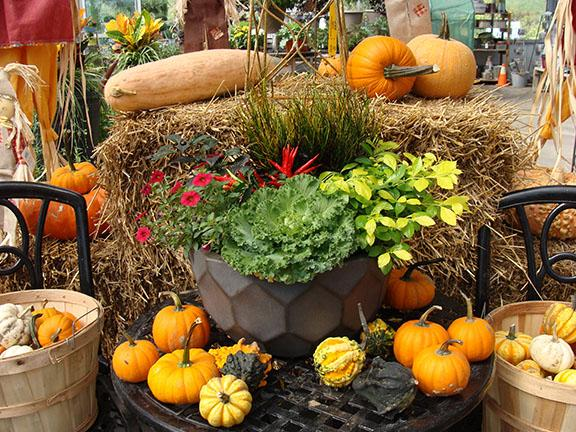 A fall container garden with pumpkins - gourds - and fall decorations available at Hillermann Nursery and Florist