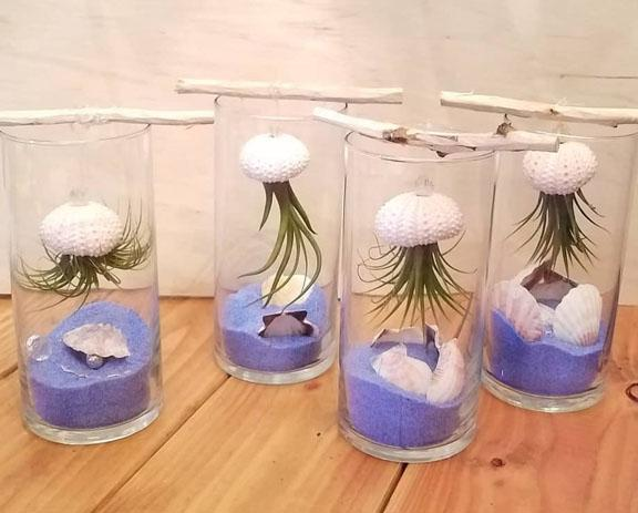 Air plant aquariums plant craft project