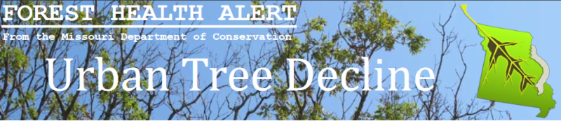 Urban Tree Decline - article from Missouri Department of Conservation - Heading image