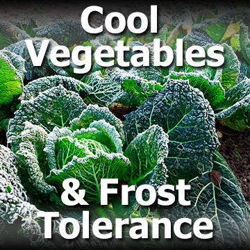 Cabbage plants with frost picture with text - Cool Vegetables and Frost Tolerance