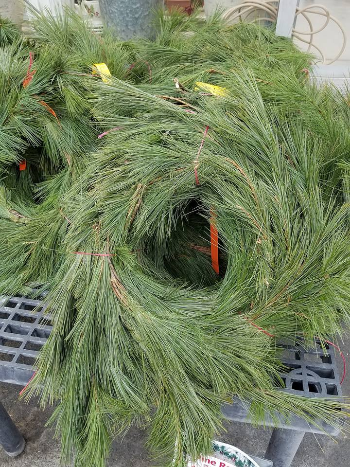 Fresh evergreen pine roping for holiday decorating available at Hillermann Nursery and Florist
