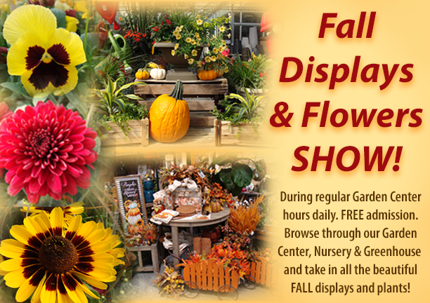 Fall pictures of plants and displays available at Hillermann Nursery and Florist - Fall Displays and Flower Show!