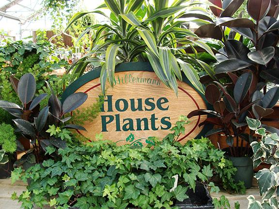Houseplants in the greenhouse at Hillermann Nursery and Florist