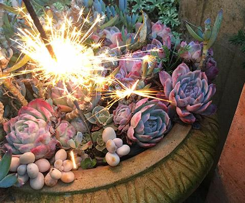 A succulent picture with a sparkler