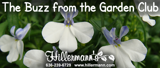 Hillermann information and flower picture graphic