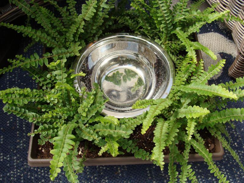 Dog water bowl planter at Hillermann Nursery and Florist