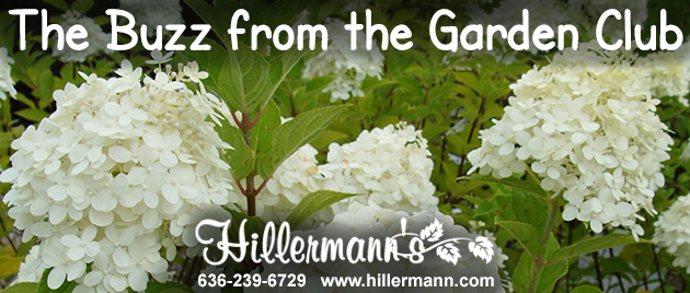 Email heading picture with the Hillermann logo