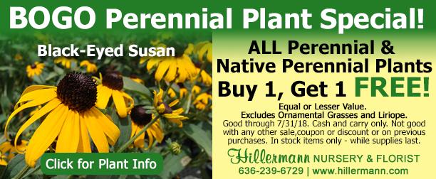 Perennial Plant Special