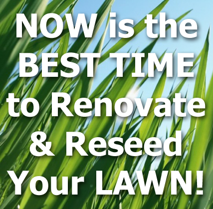 Lawn grass blades with title text - Now is the best time to renovate and reseed your lawn