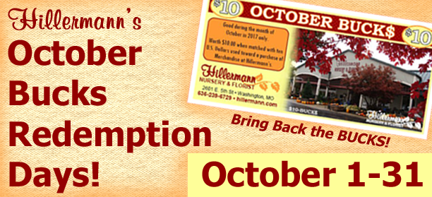 Hillermann's October Bucks Redemption Days - October 1-31. Reminder picture and text graphic for Hillermann Nursery and Florist