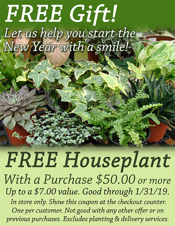 Free Houseplant with a 50.00 purchase - good through 1-31-19 at Hillermann Nursery and Florist