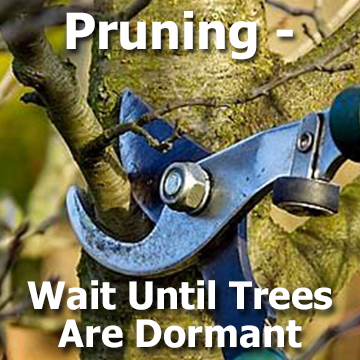 Pruning - Wait Until Trees are Dormant article title graphic with a pruning picture