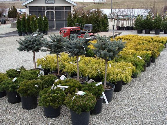 Plants and items at Hillermann Nursery and Florist