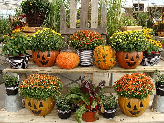 Fall plants and items available at Hillermann Nursery and Florist