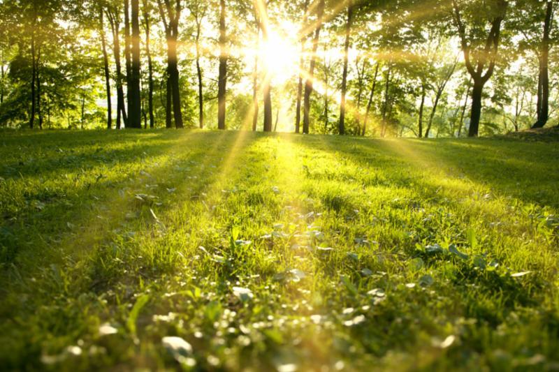 spring_forest_sunrise.jpg