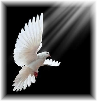 Holy Spirit is the Guest