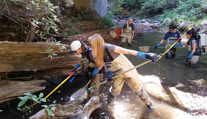 Surveying for juvenile salmon