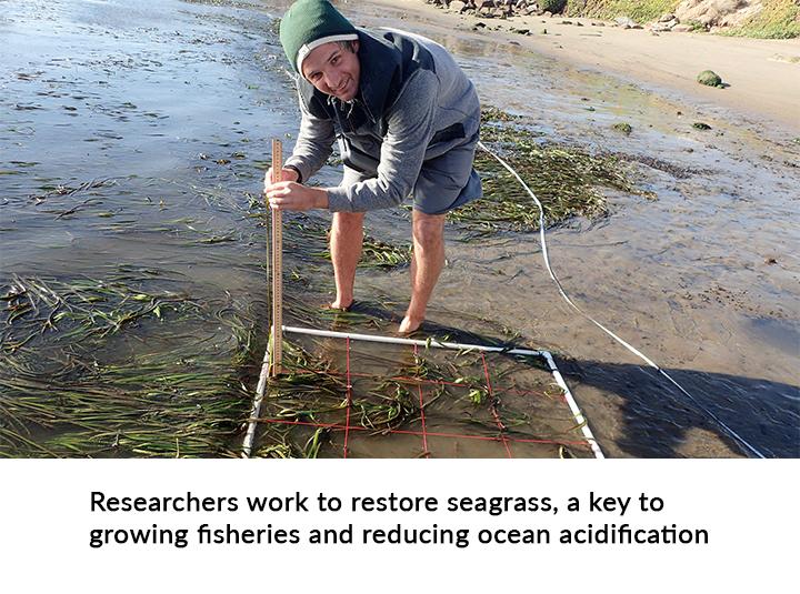 Evan Mundahl of the Morro Bay National Estuary Program studies seagrass plots