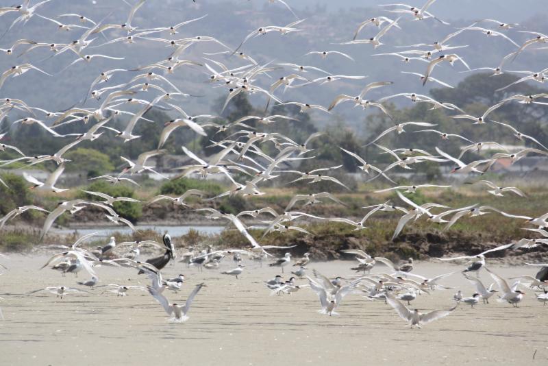 Santa Barbara Area Coastal Ecosystem Vulnerability Assessment report