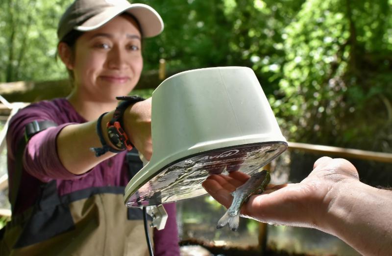 Russian River Fish Monitoring