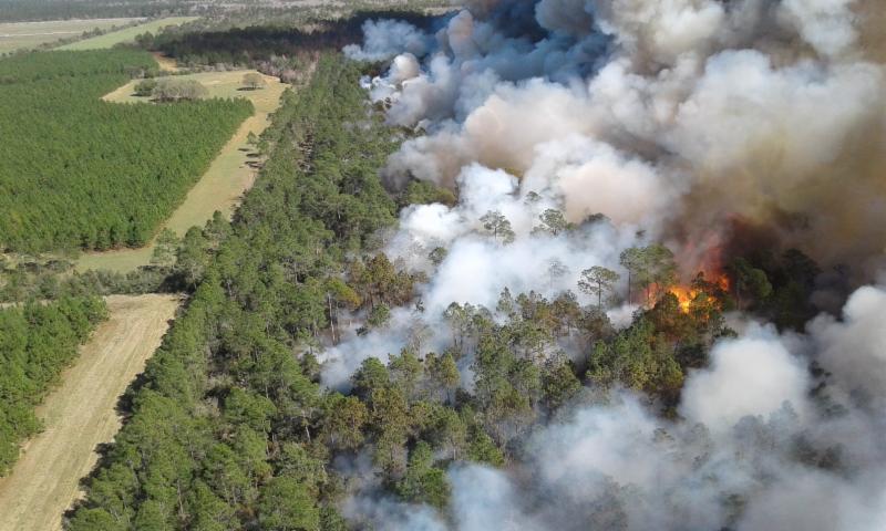 Photo Courtesy of Northwest Florida Water Management District