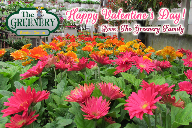 Happy Valentine's Day from The Greenery