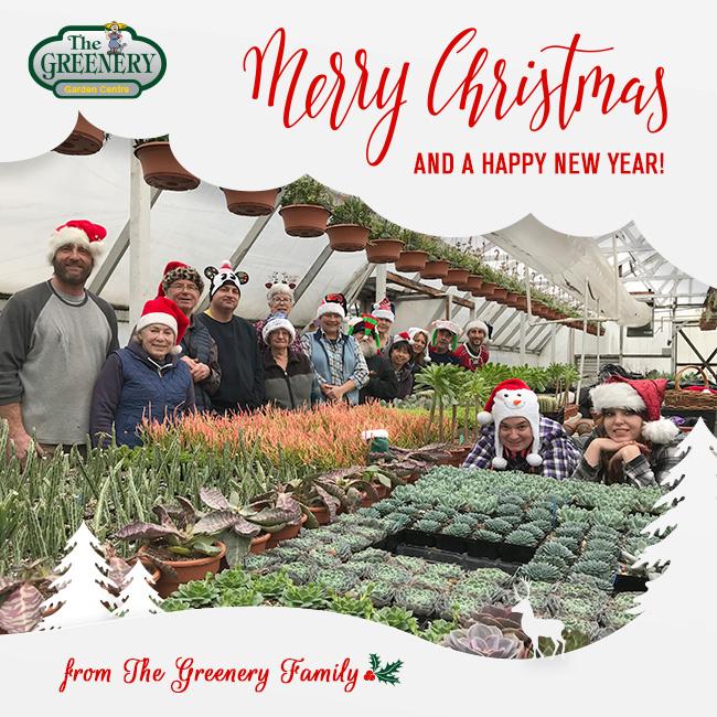 Greenery Christmas