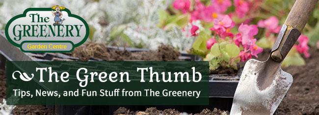Greenery Newsletter TGGC